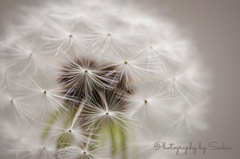 Sparkle for blog